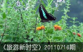 蝴蝶网风情谷白白色