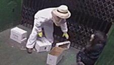 养蜂人货梯内不小心打翻蜂箱 路人吓得惊慌失措