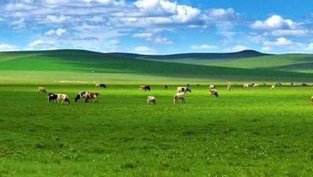 【美景】草原风光-呼伦贝尔草原