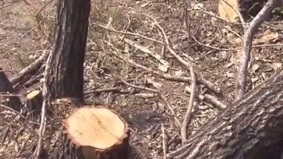 村民砍伐承包山林进看守所 休闲农业三大禁忌