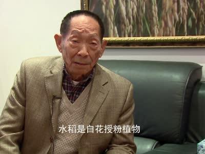 """""""可惜人不吃草啊"""":听袁隆平谈""""水稻的那些事儿"""""""