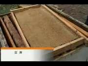 蜜蜂养殖技术关于蜜蜂养殖2015蜜蜂养殖