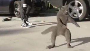 猫咪舞姿酷炫 主人甘拜下风
