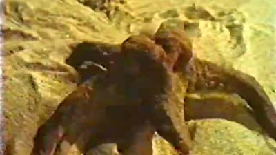 1978 第50届奥斯卡最佳动画短片 沙丘城堡 The Sand Castle