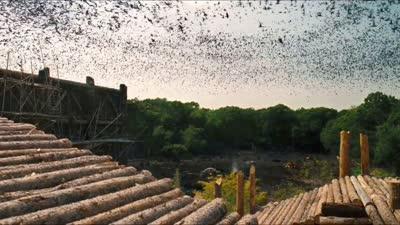 《诺亚方舟:创世之旅》超级碗电视宣传片