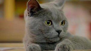猫咪家惊现神秘快递