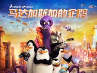 马达加斯加的企鹅