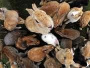 爱丽丝彻底掉进了兔子洞  成千上万毛茸茸的小可爱