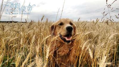 《一条狗的使命》终极预告  萌宠贝利四世轮回悟狗生真谛