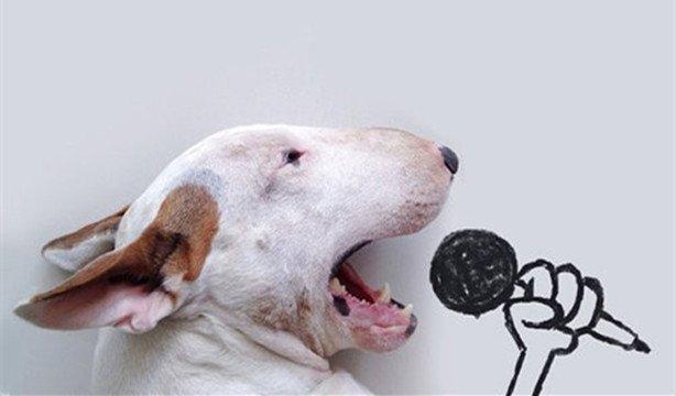 十一只狗狗组成乐队 齐心协力同唱一支歌