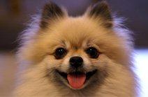 宠物独家专访宠爱国际动物医院