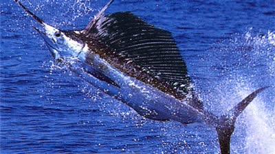 壁纸 动物 海洋动物 鲸鱼 桌面 400_225