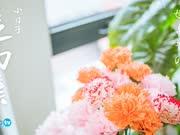 《造物集小日子》07母亲节の康乃馨