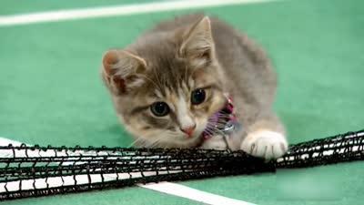 最萌喵星人打奥运:网球场上尽显曼妙身姿
