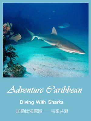 Caribbean expedition-diving with sharks