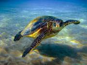 神奇的海龟