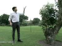 《我爱学规则》第十四集:球被打到树上该如何处理