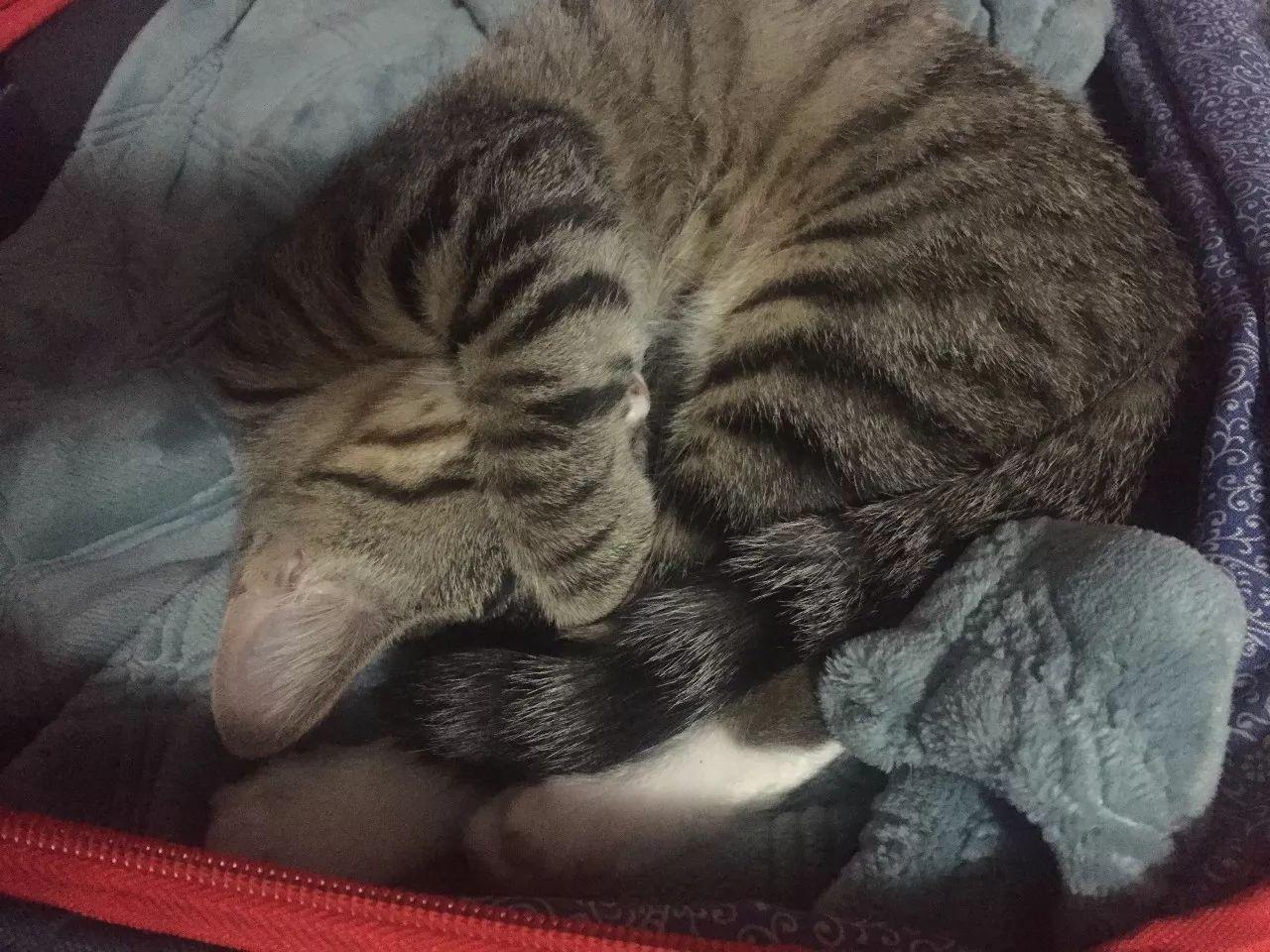 谢谢你们点进来~ 我家的猫刚来的时候那么小一点 在身上超级可爱 冬天