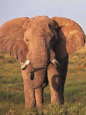 非洲的魅力