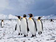 VR纪录片《南极-冰河之旅》-国家地理呈献