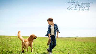 《一条狗的使命》角色版预告  汪星人使命轮回暖化人心