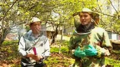 丹尼斯亲手体验取蜂蜜