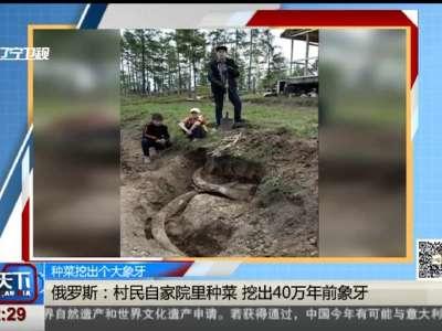 [视频]种菜挖出个大象牙:俄罗斯——村民自家院里种菜 挖出40万年前象牙
