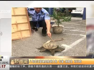 [视频]八旬老汉菜地里捡到大龟 专家:别放生 可以吃