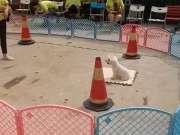 圣宠宠物训犬班狗狗上垫子3D训练
