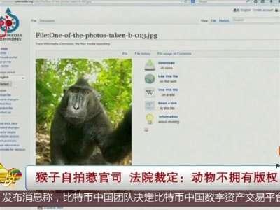 [视频]猴子自拍惹官司 法院裁定:动物不拥有版权