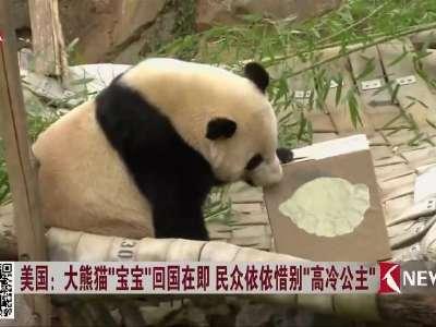 """[视频]美国:大熊猫""""宝宝""""回国在即 民众依依惜别""""高冷公主"""""""