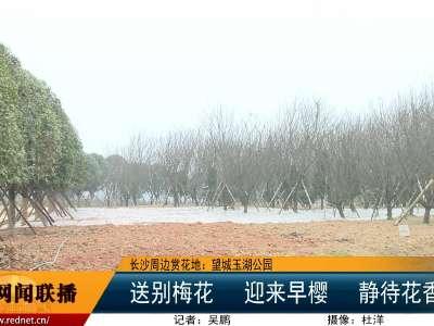 长沙市望城区玉湖公园:送别梅花 迎来早樱