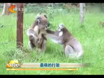 [视频]最萌的打架