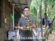 大熊猫也过端午 满园找粽子