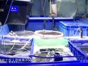 《纪录片编辑室》20170621:水族馆