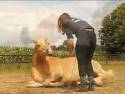 身材丰满的女主人训练魁梧的种马,听话的马按女主人指令完成每一个动作