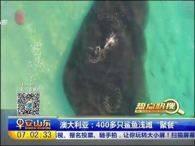 """[视频]澳大利亚:400多只鲨鱼浅滩""""聚餐"""""""