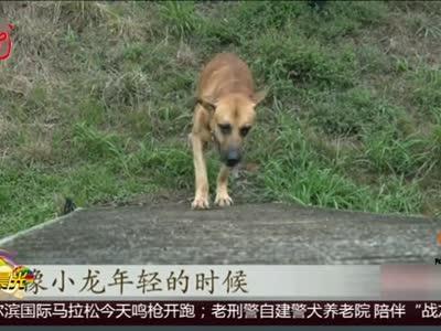 """[视频]杭州:老刑警自建警犬养老院 陪伴""""战友""""走完一生"""