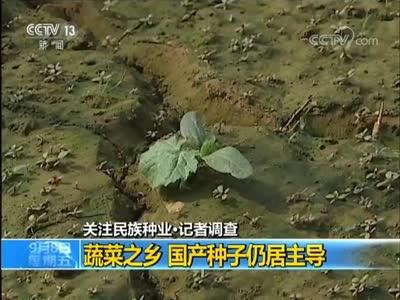 [视频]关注民族种业·记者调查:蔬菜之乡 国产种子仍居主导
