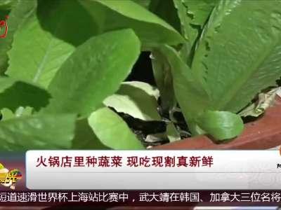 [视频]火锅店里种蔬菜 现吃现割真新鲜
