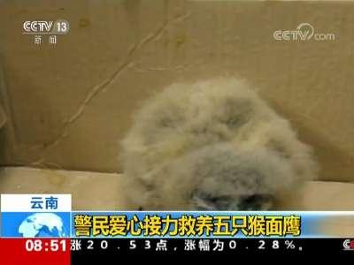 [视频]云南 警民爱心接力救养五只猴面鹰