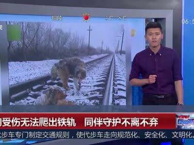 [视频]小狗受伤无法爬出铁轨 同伴风雪中守护不离不弃
