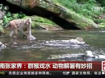 [视频]湖南张家界:群猴戏水 动物解暑有妙招