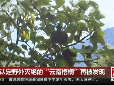 """[视频]被认定野外灭绝的""""云南梧桐""""再被发现"""