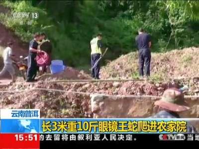 [视频]云南普洱:长3米重10斤眼镜王蛇爬进农家院