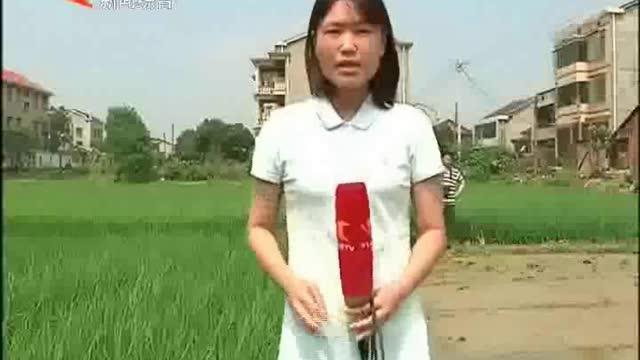 七旬老人记录传统农耕
