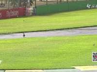 F1澳大利亚站FP2 赛道惊现萌鸭过马路