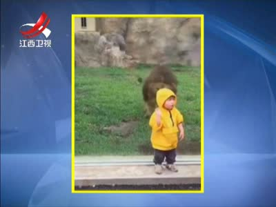 """[视频]猛兽出动 遵守规则:动物园里的""""危险""""瞬间"""