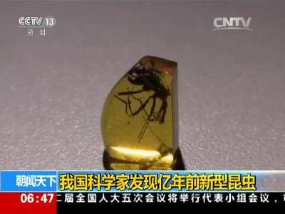 [视频]我国科学家发现亿年前新型昆虫