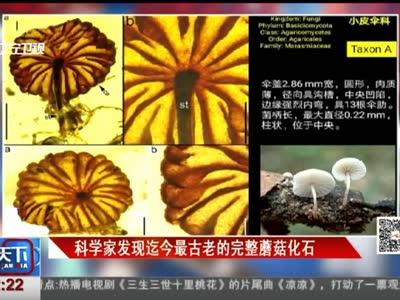 [视频]科学家发现迄今最古老的完整蘑菇化石